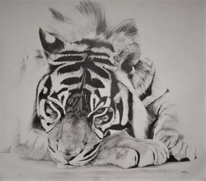 Tiger Pencil Sketch